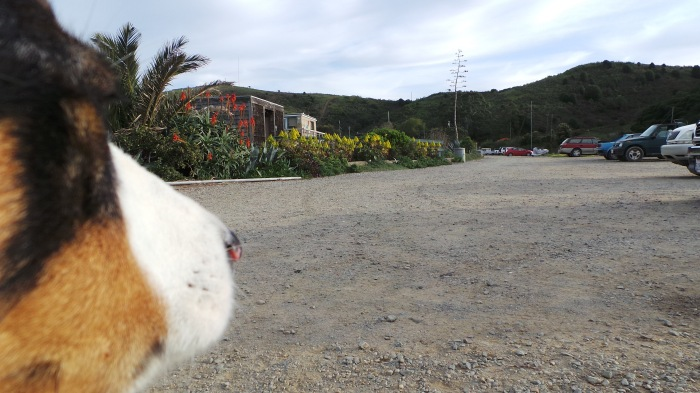 A dog's perspective on The Way